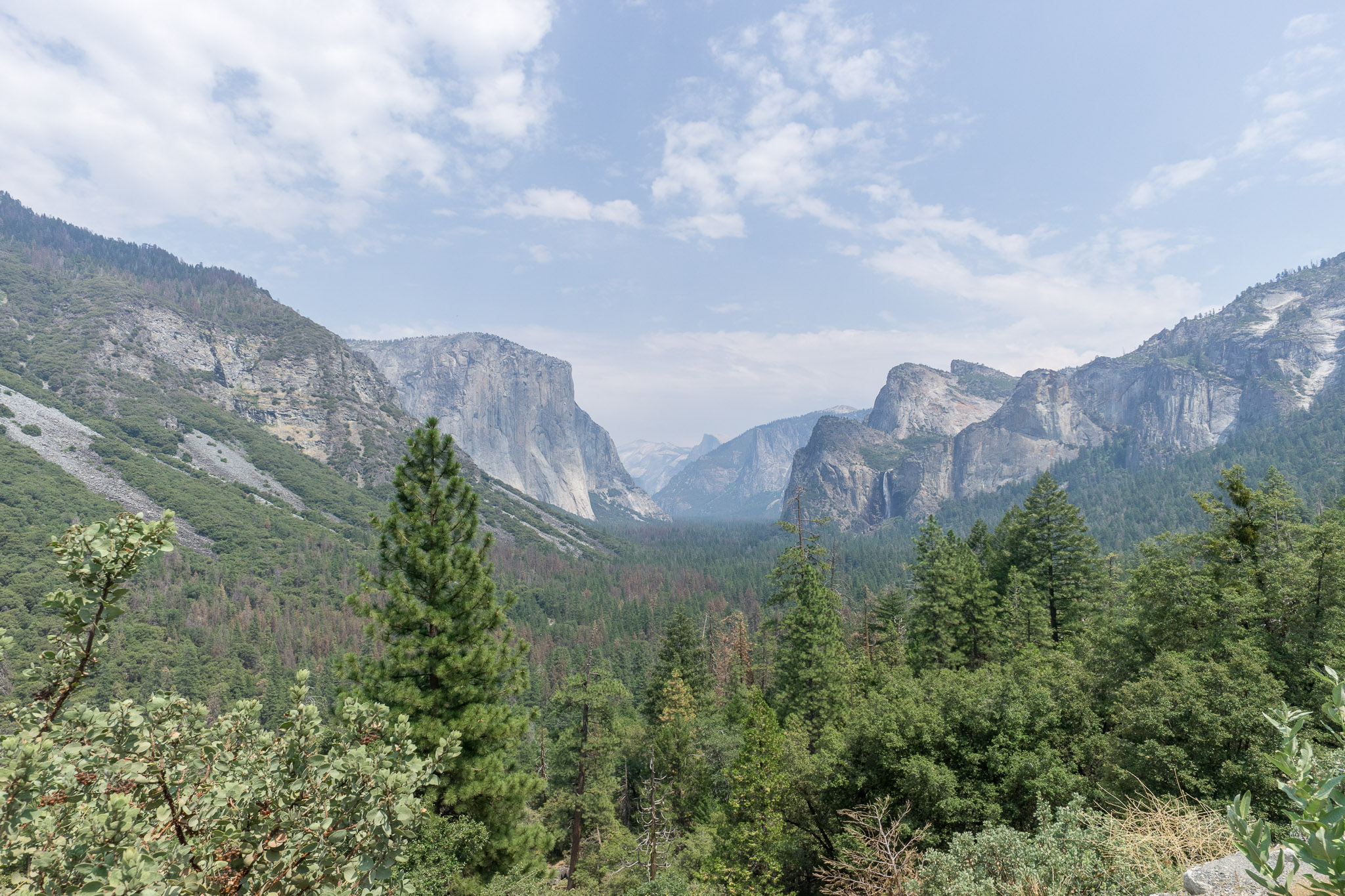 Tunnel view in August