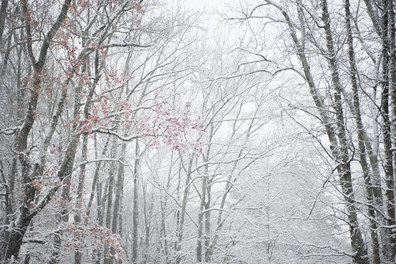 Jack's First Snow.jpg