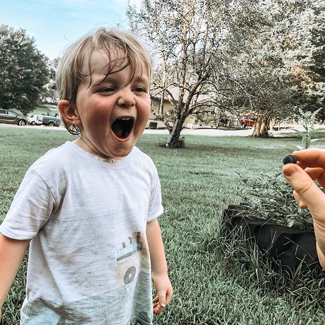 It's not summer until you're up way too late past your bedtime picking blueberries and seeing how many you can catch in your mouth.
