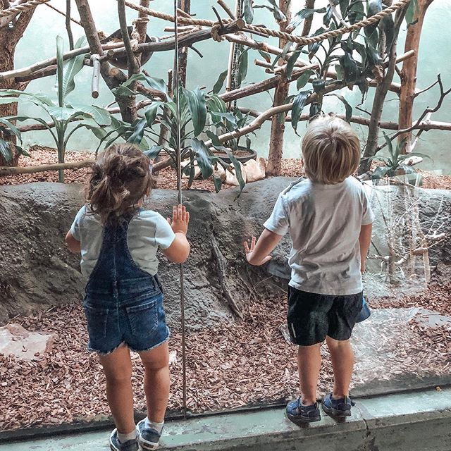 Back to school means having the zoo all to ourselves! Just a few more weeks before these two will each have little sisters. 💕
