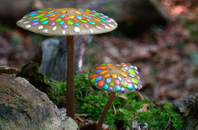 Painted Mushrooms (#52),  2002  Photograph