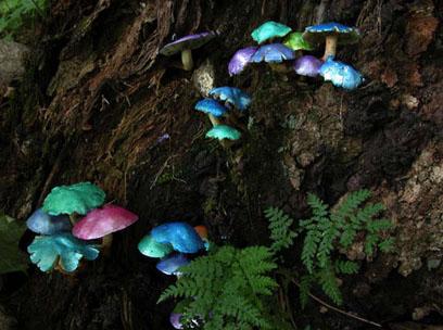 Painted Mushrooms (Canada),  2003  Photograph