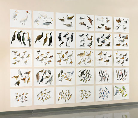 "Post-Audubon, Birds of North America, middle, one-third of installation,  2008  103"" x 154"", 30@ 19"" x 24"" Sharpie/watercolor on paper"