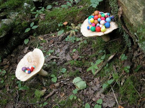 Untitled (fungi)  2004  Photograph