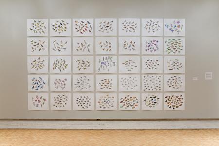 "Chazen Art Museum   North American Insects Birds & Plants (in progress),  2007-2008  103"" x 180"", 35 @19"" x 24"" Sharpie & watercolor"