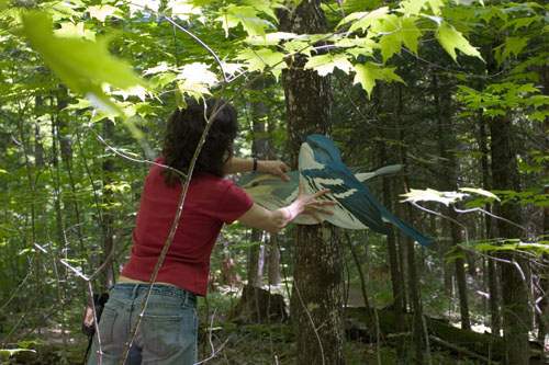 Cerulean Wablers (native),  2007  Enamel on plywood  Forest Art Wisconsin, Northern Highland-American Legion State Forest