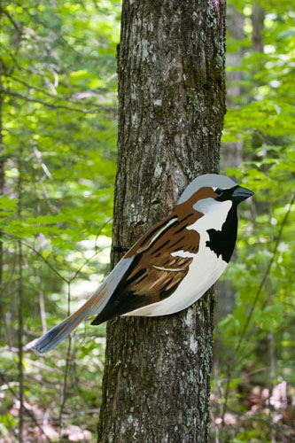 House Sparrow (invasive),  2007  Enamel on plywood  Forest Art Wisconsin, Northern Highland-American Legion State Forest