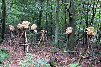Mushroom Installation,  2002  Darmstadt, Germany