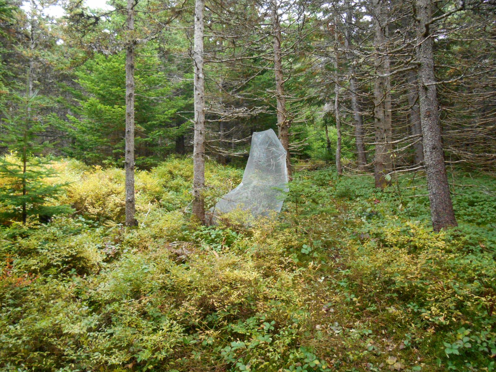 Spirito , metal mesh, 5 x 6 x 4 feet, 2013. Site Specific sculpture, East Coast Trail, St. Johns, Newfoundland, Canada, 2013.