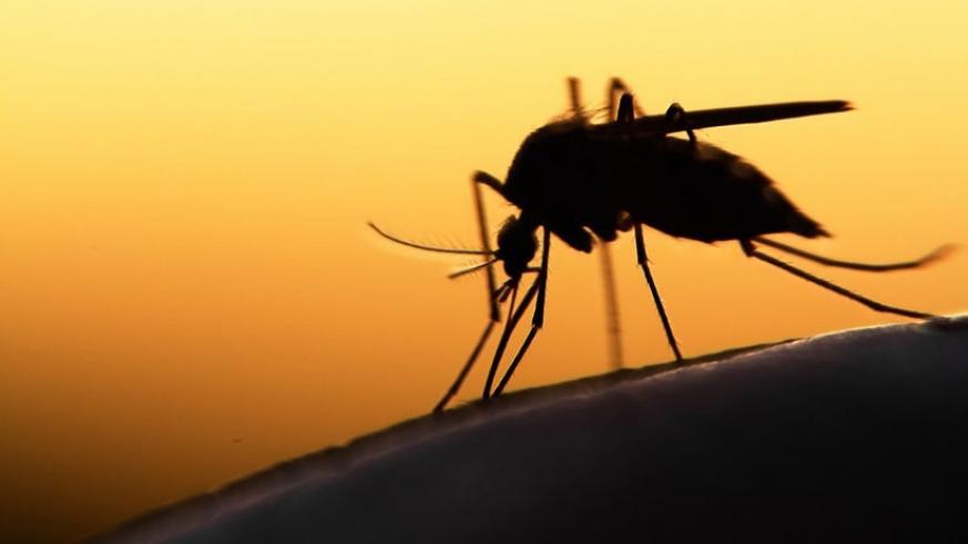 malaria 2.jpg