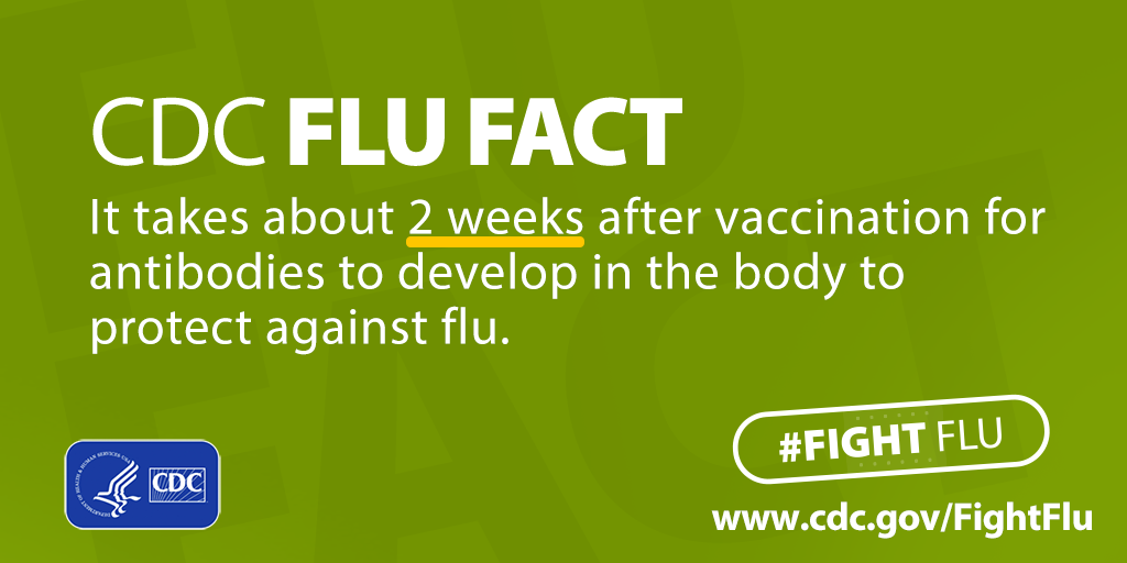 fight-flu-fact_two-weeks-antibodies.png