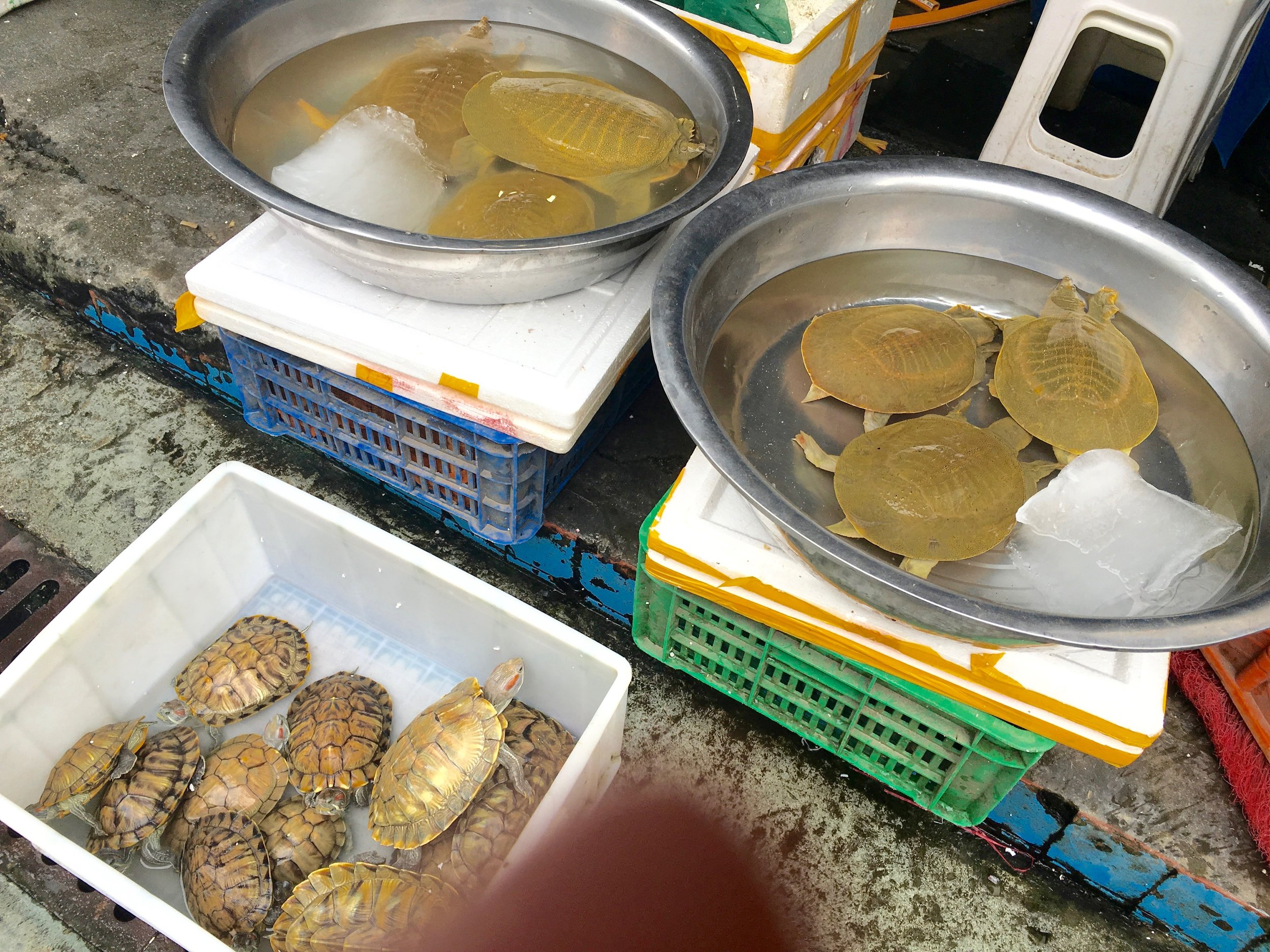 We haven't talked about seafood yet. One vendor displayed two types of turtles.