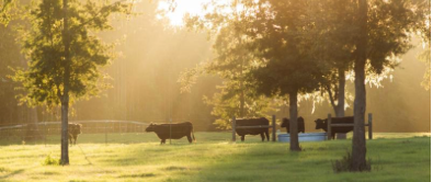 Have a DoveCote Dinner at Clear Creek Farm ranch wagyu