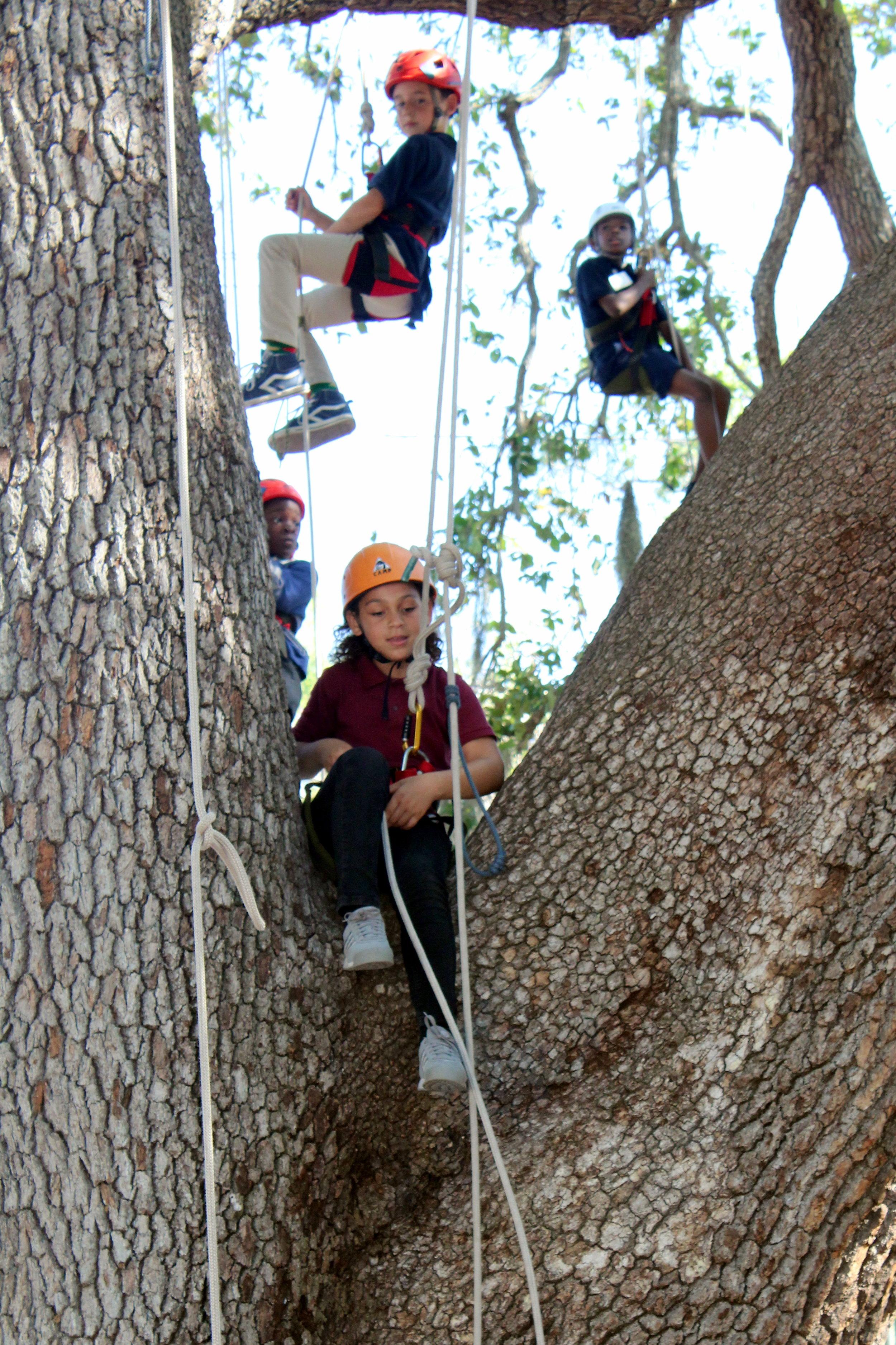 tree trunk with climbers.JPG