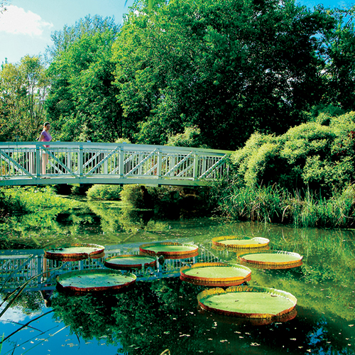 Giant Victoria Water Lillies at Kanapaha Botanical Gardens -  courtesy   Visit Gainesville