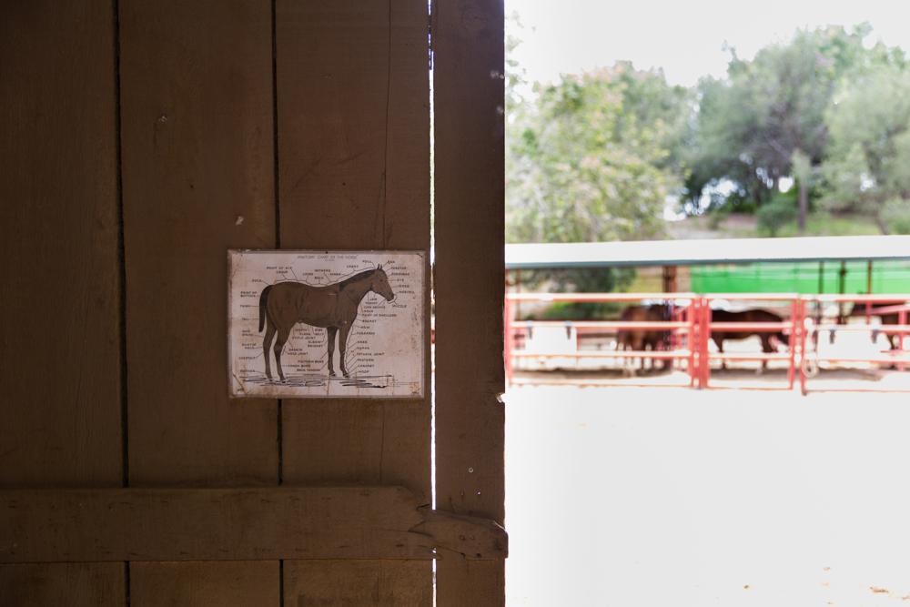 Thacher_HorseFinals-5.JPG