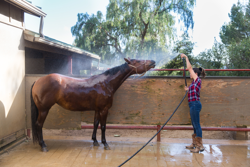 Thacher_HorseFinals-14.JPG