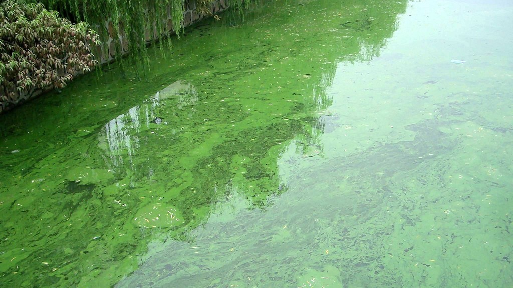 algal-bloom-river-china-1024x576.jpg