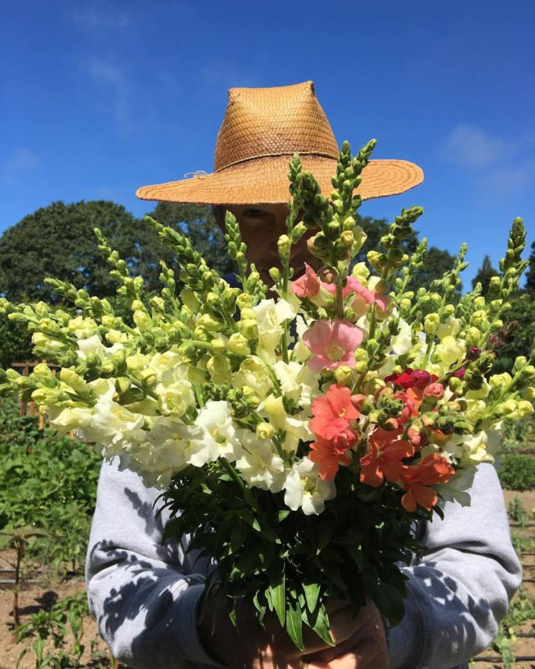 Jeremy peaking through a bundle of last seasons snapdragons - can't for these beauties to bloom!