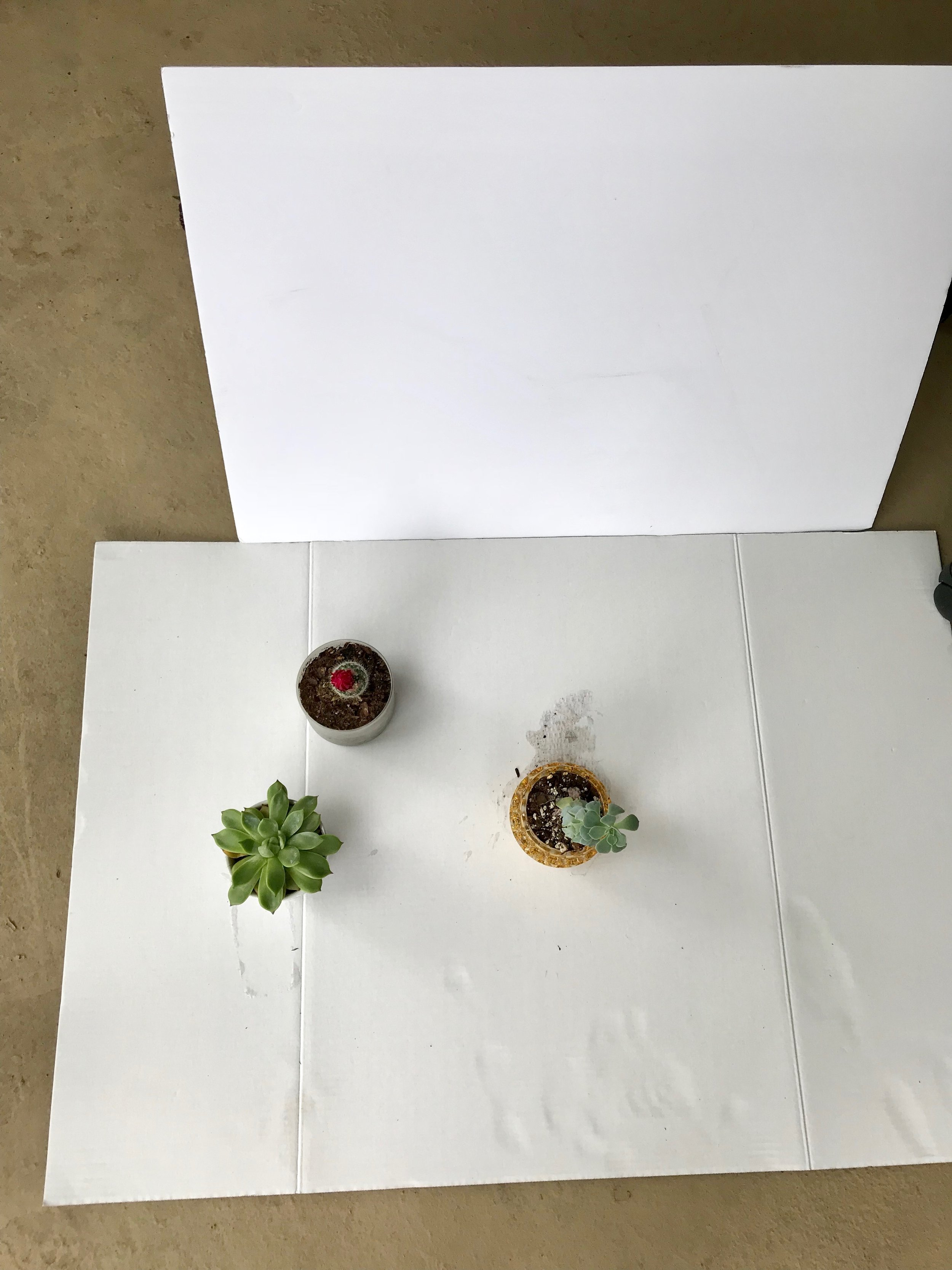 This was my setup. I was out on the balcony, and I used two white cardboards, using the top one to bounce off the light that was coming in. I reposition myself for all the shots, so that I didn't have to move the cardboards. Sorry for the dirty cardboard!