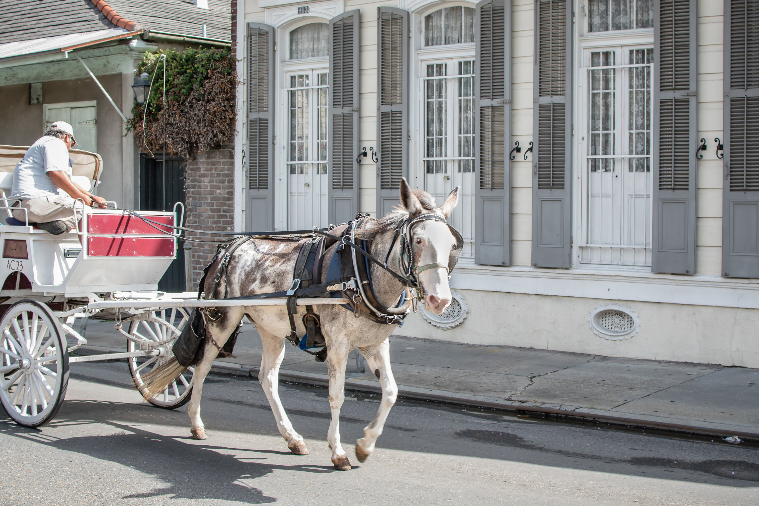new-orleans-french-quarter-one-time-in-nola-travel-photographer-yanitza-ninett-57.jpg