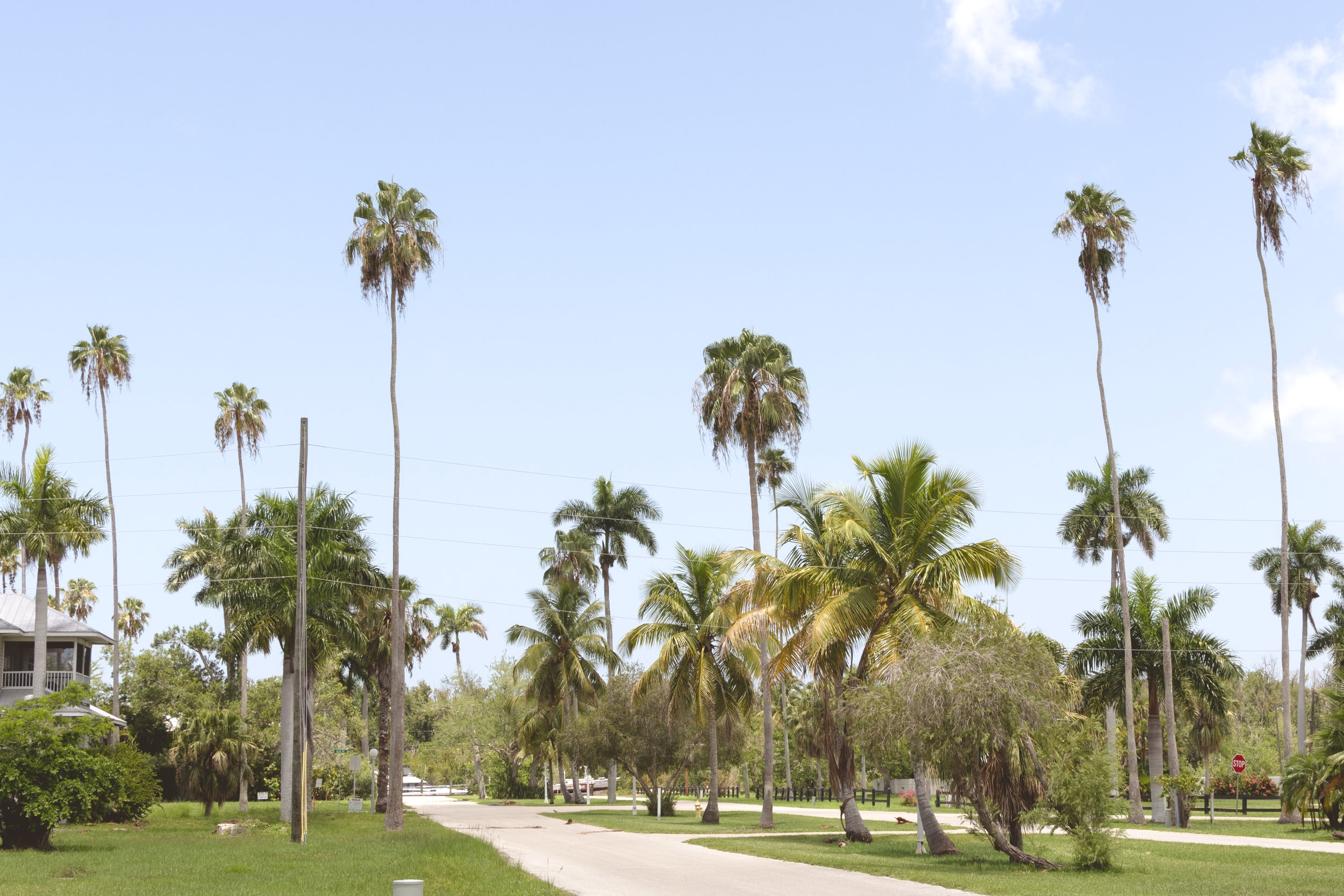 south-west-florida-traveling-to-the-everglades-orlando-travel-photographer-yanitza-ninett-3.jpg