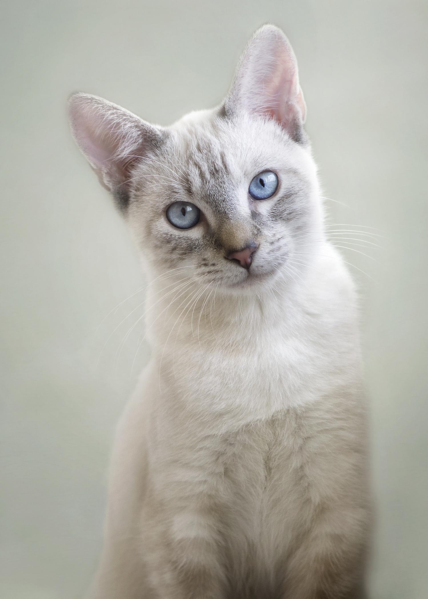 Rescue Cat.jpg