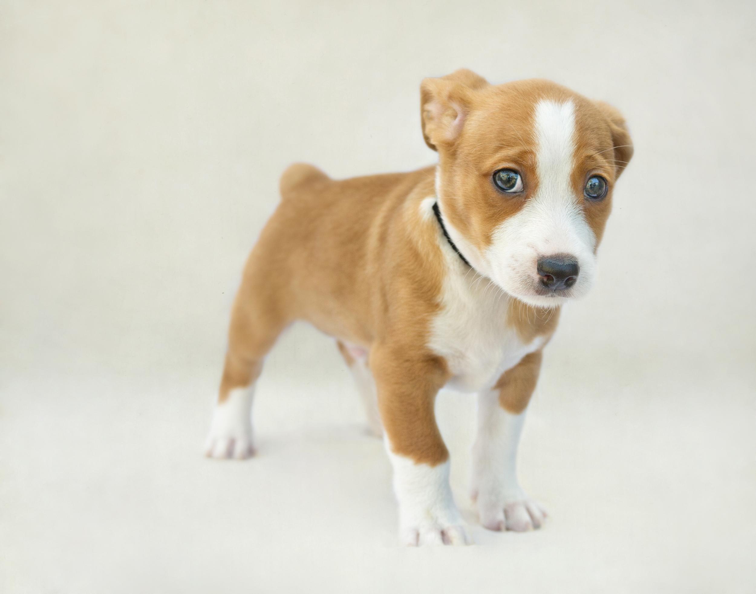 Rescue Puppy .jpg