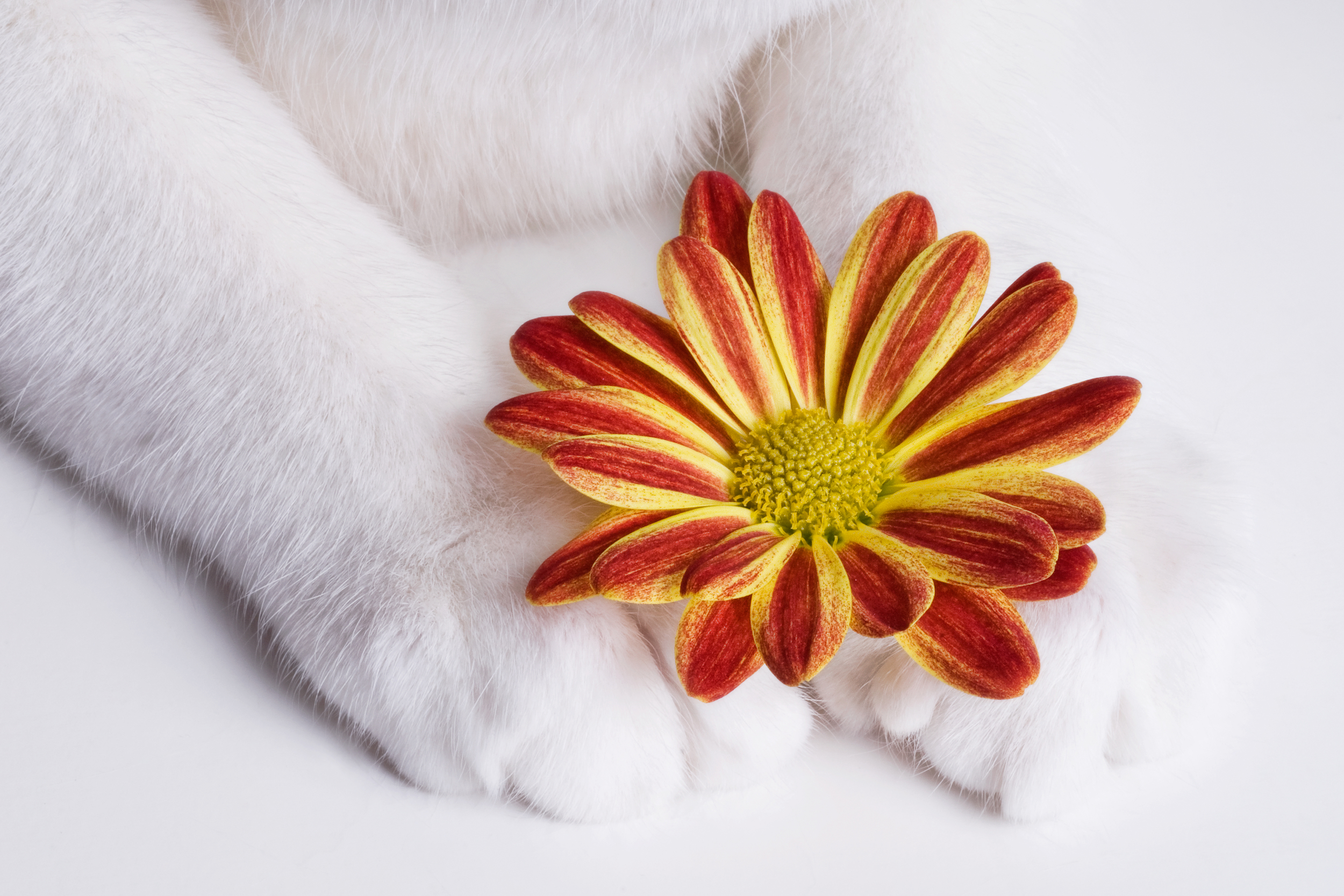 Petals and Paws.jpg