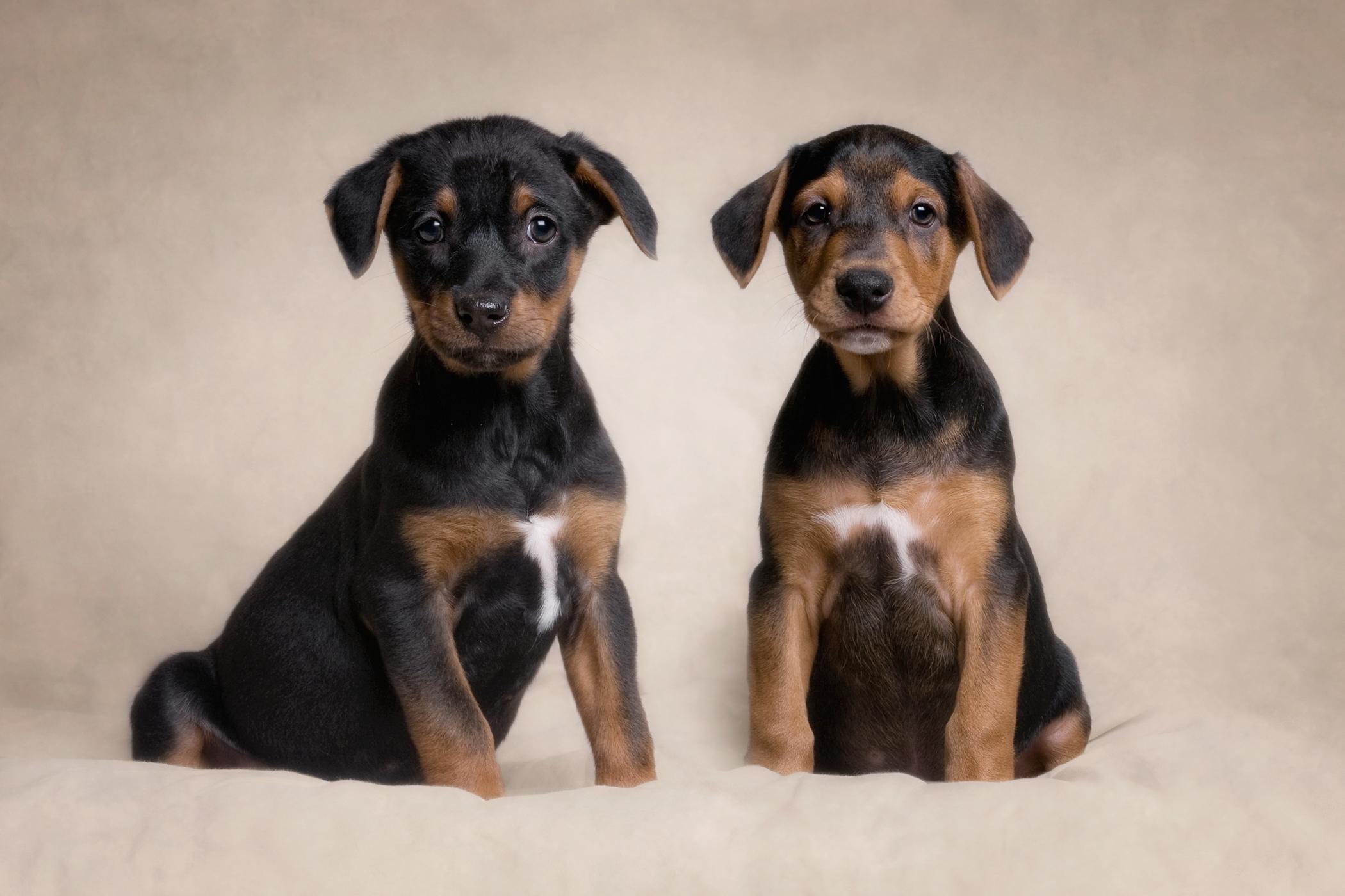 Rez Pups.jpg