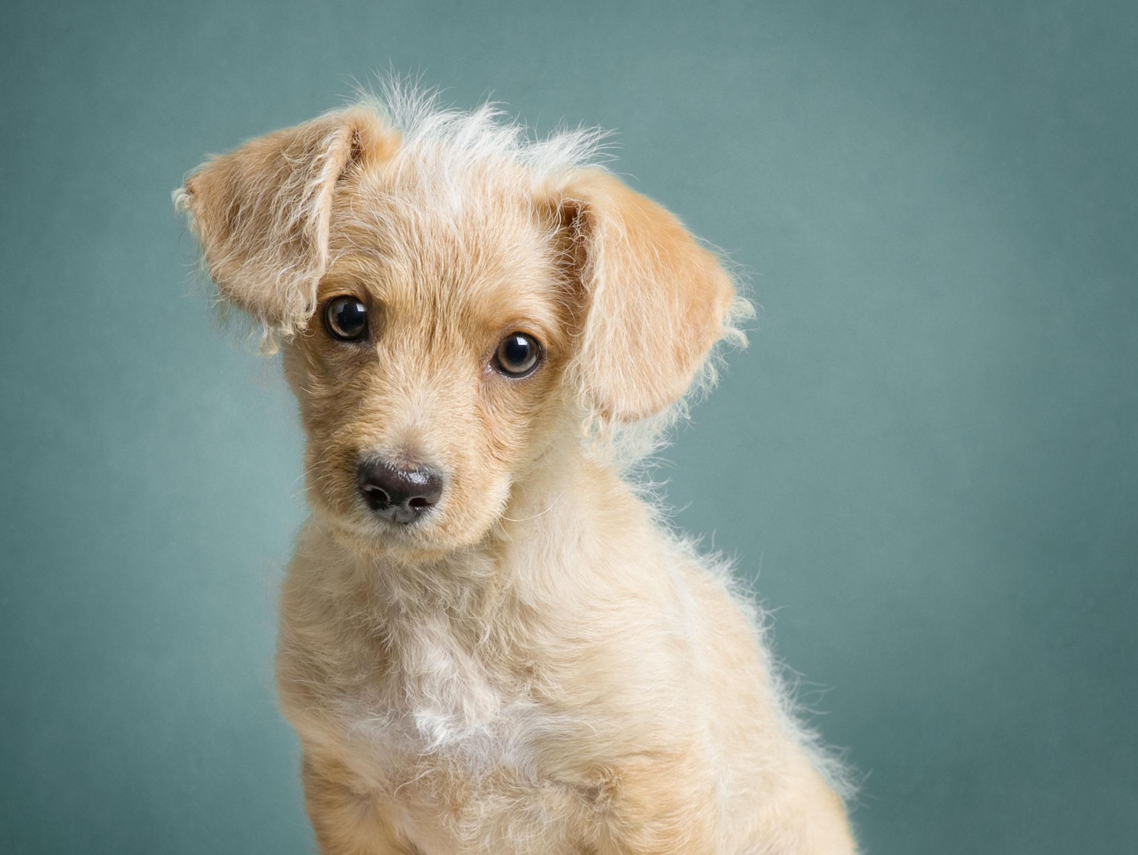 AZ-Happy-Tails-Pup.jpg