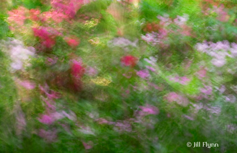 Channeling Monet with some motion blur.