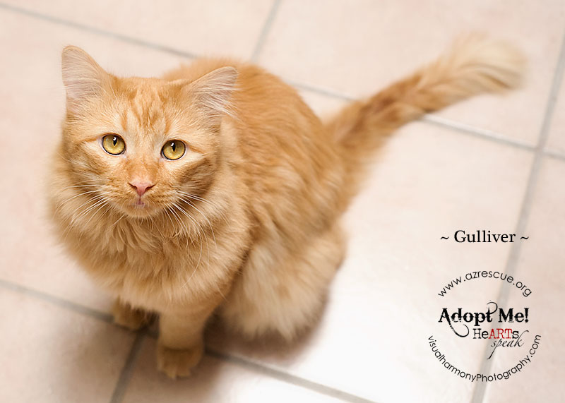 adopt-gulliver