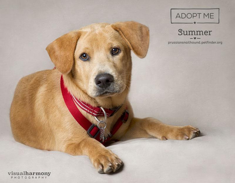 Summer -  AZ Prussian Snailhound Dog Rescue