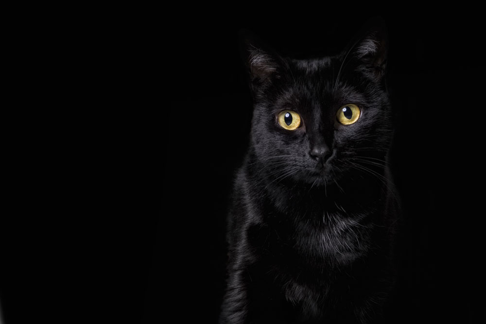 While many people think   BLACK   cats all look the same, I couldn't disagree more. Black cats are like snowflakes - no two faces are the same. They are unique, magnificent and beautiful.