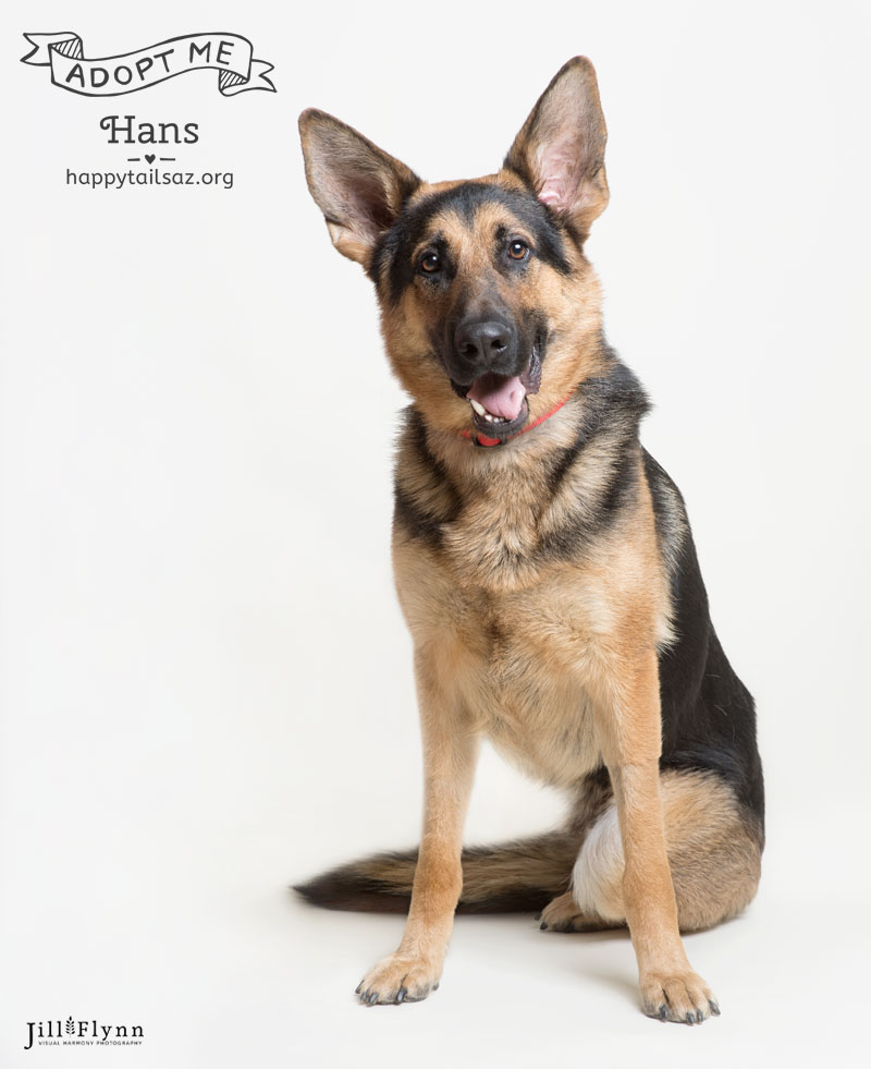 Do you have a soft spot for three legged animals with goofy smiles? Hans is your guy and you can meet him at  AZ Happy Tails .