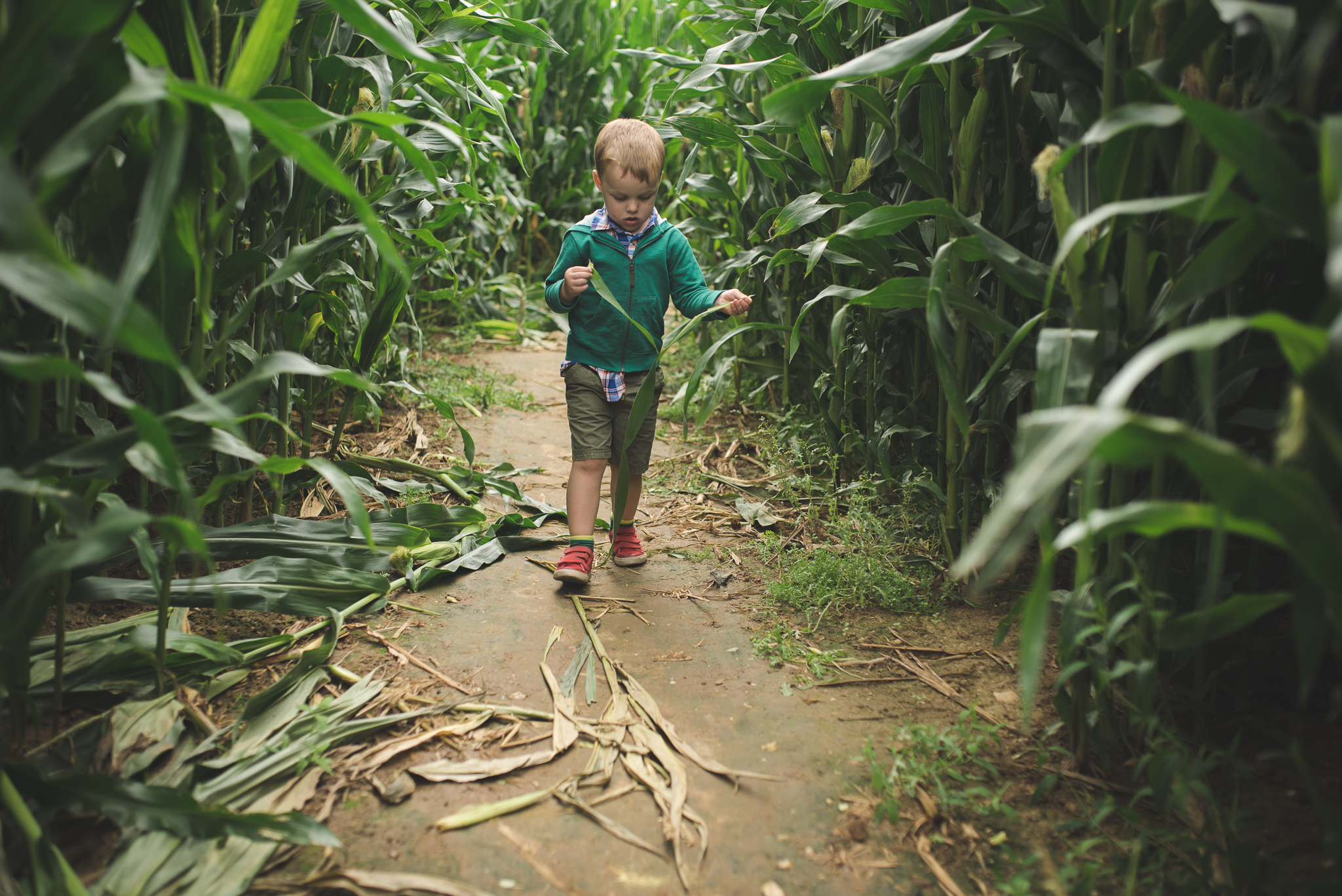 Walking through this maize maze, I snapped this as he walked followed behind me