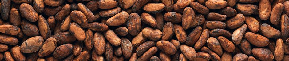 Atitlan Organics Cacao Beans, Permaculture, Organic, Tzununa, Lake Atitlan, Guatemala, Central America, Permaculture Course