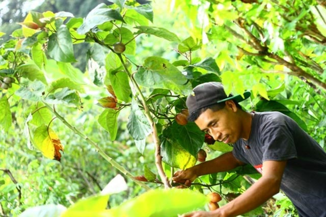 Nicolas Hernandez, Farm Manager, Atitlan Organics., Permaculture, Farm, Lake Atitlan, Guatemala, Central America, Regenerative Agriculture