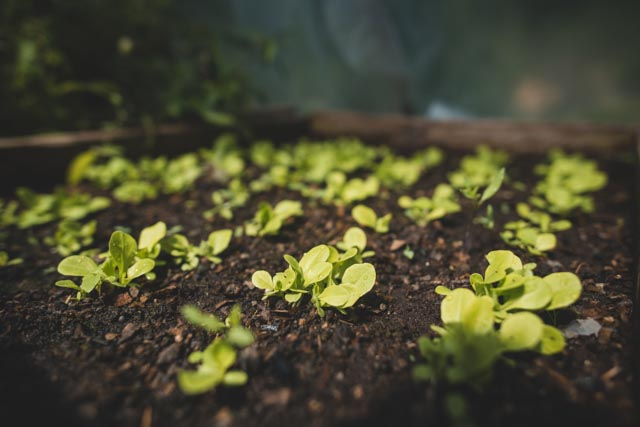 Gardens, Atitlan Organics, Permaculture Design Certification Course, Permaculture, PDC, Sustainability, Regenerative Agriculture, Tzununa, Lake Atitlan, Guatemala, Central America