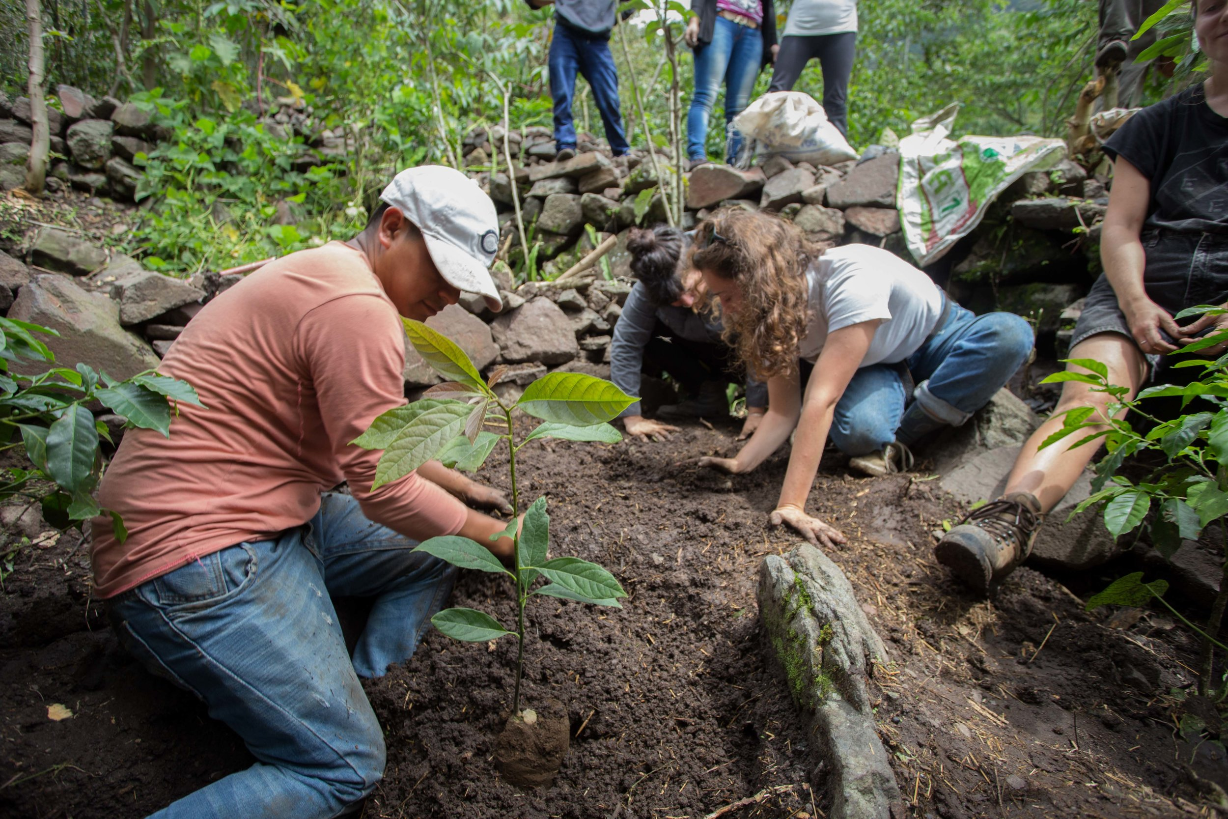 Preservation of rare and endangered avocado breeds in Lake Atitlan.