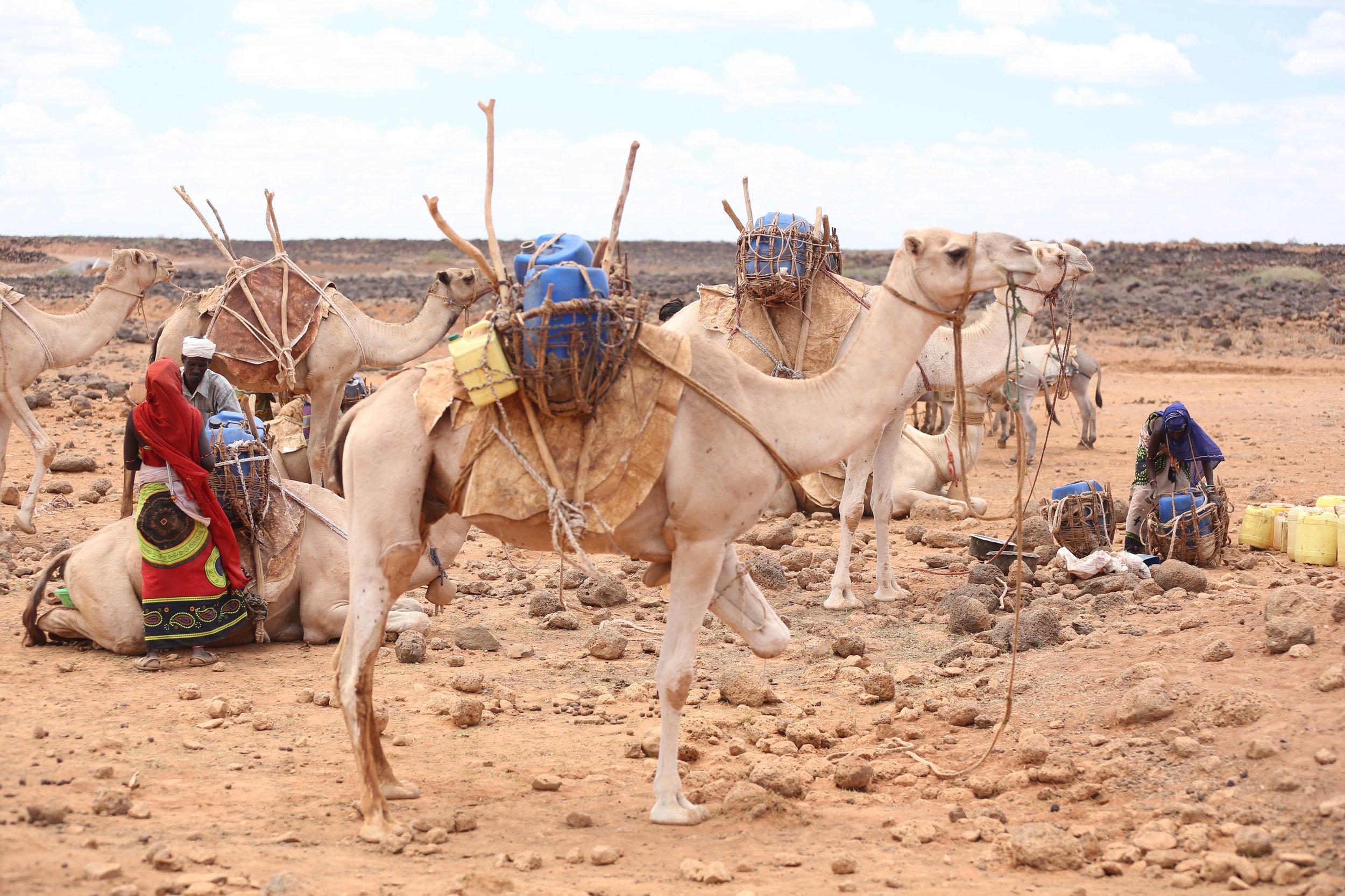 camel-2938.jpg