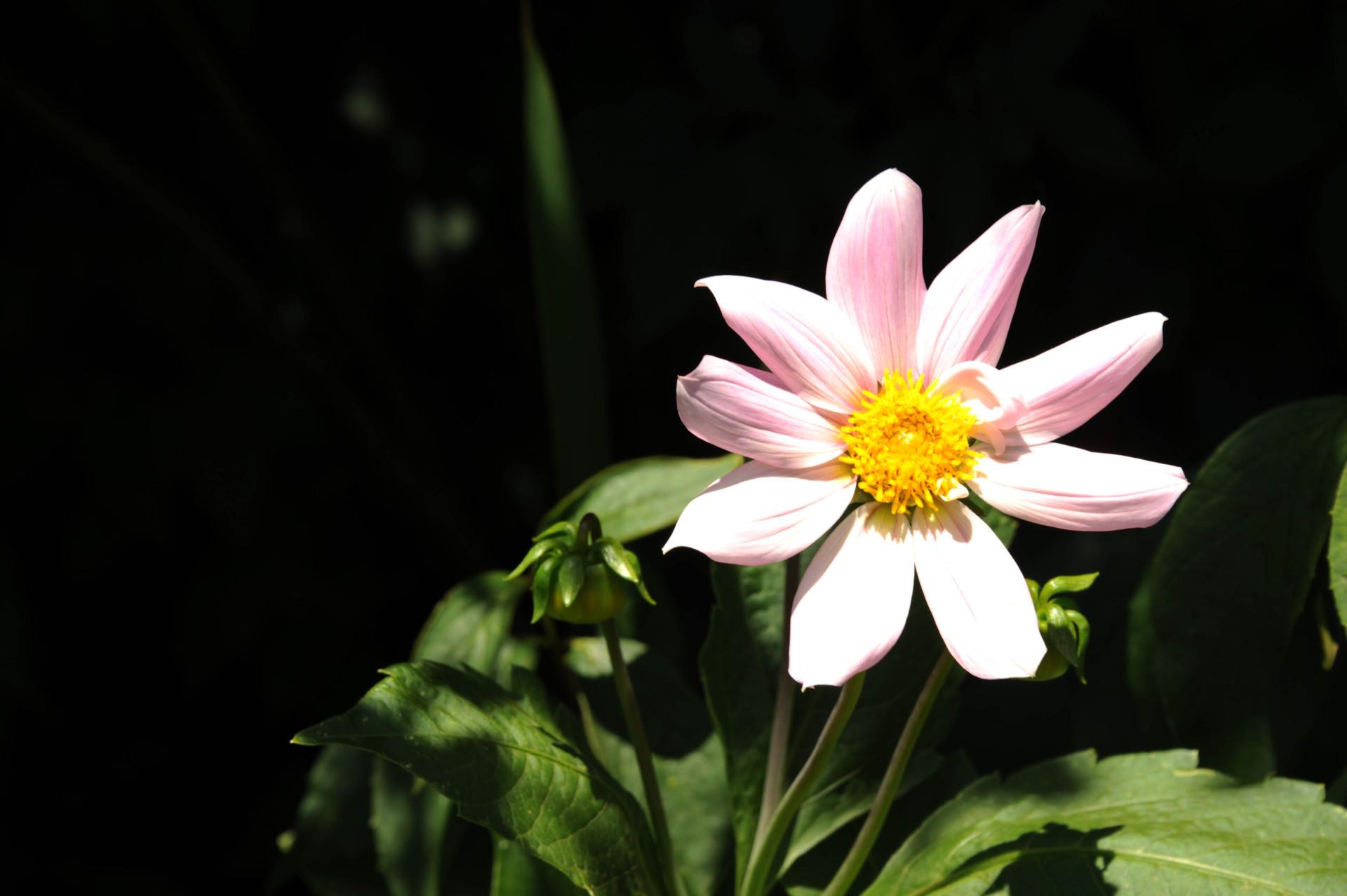 spring2-1-of-1-e1427811482401.jpg