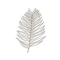 TWINENGINECOFFEE-leaf+artwork34.jpg
