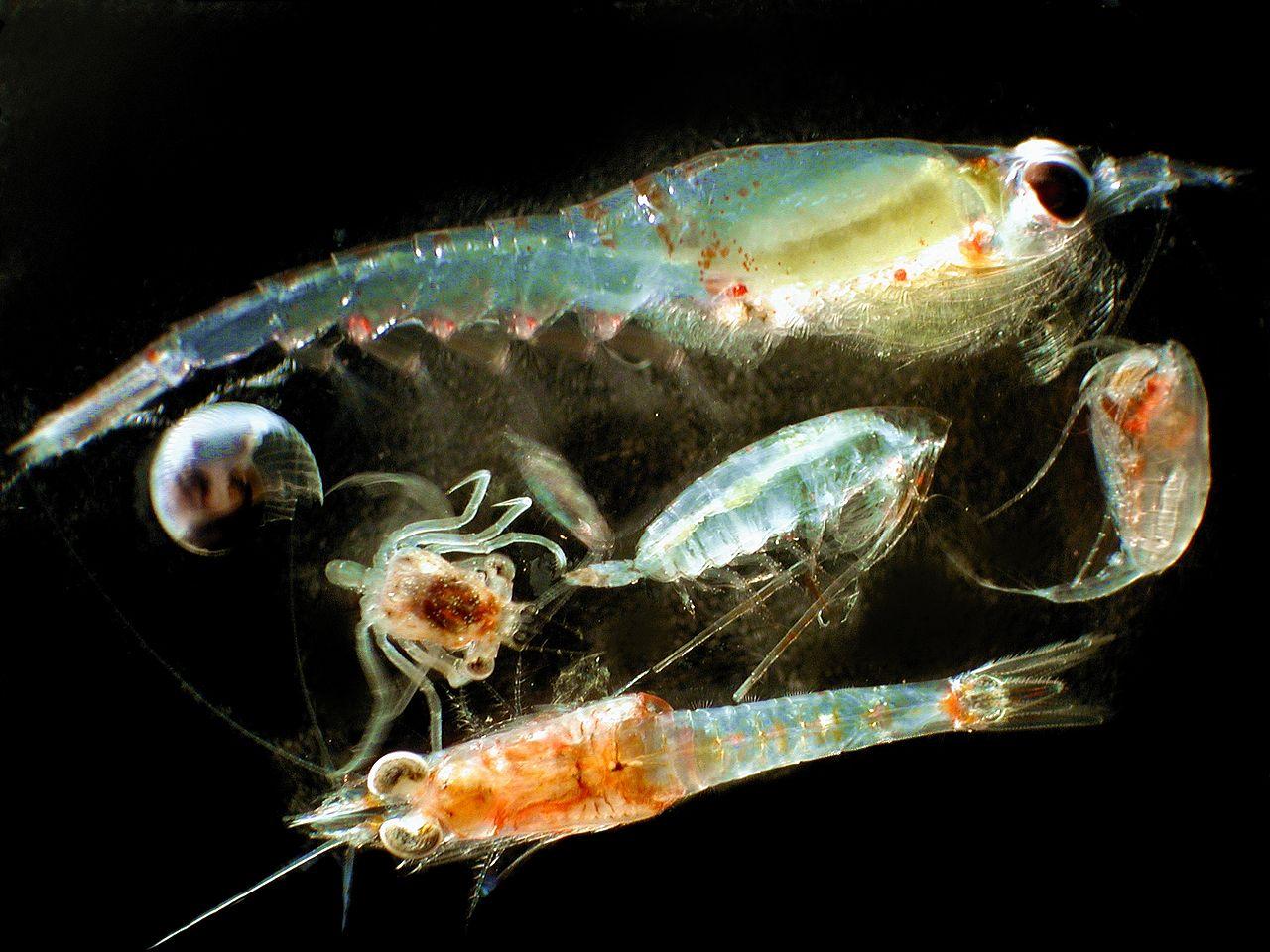 Zooplankton.jpg