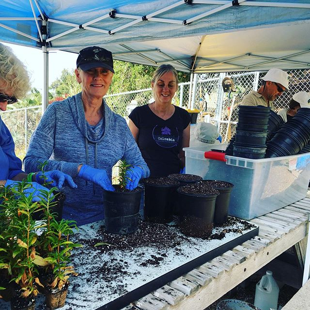 215 baby #plants potted into 1 gallon pots this morning, thanks to @friends_of_griffith_park and our trusty #volunteers! #commonwealthnursery #griffithpark #californianativeplants #nursery