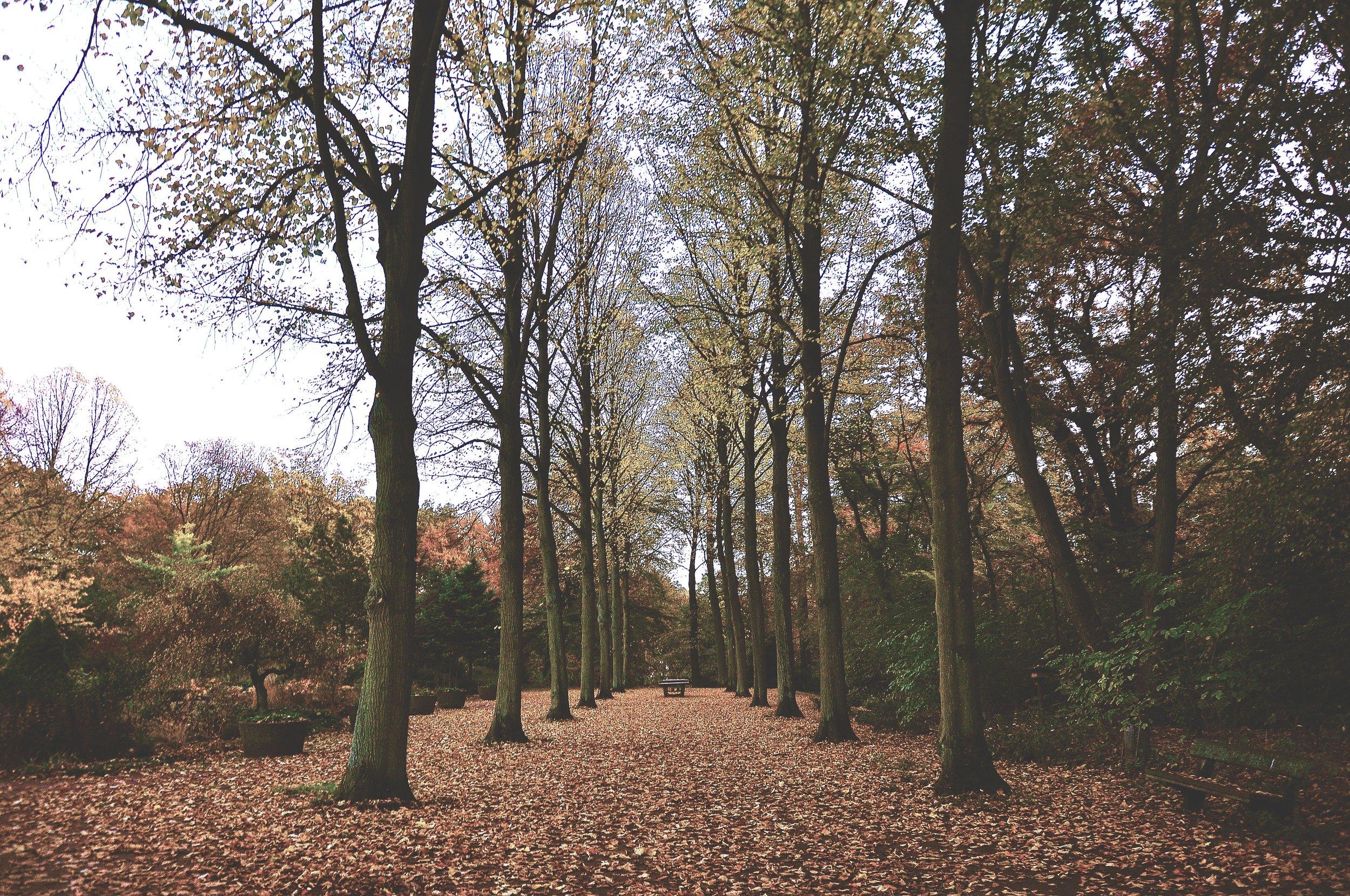 Park2.png