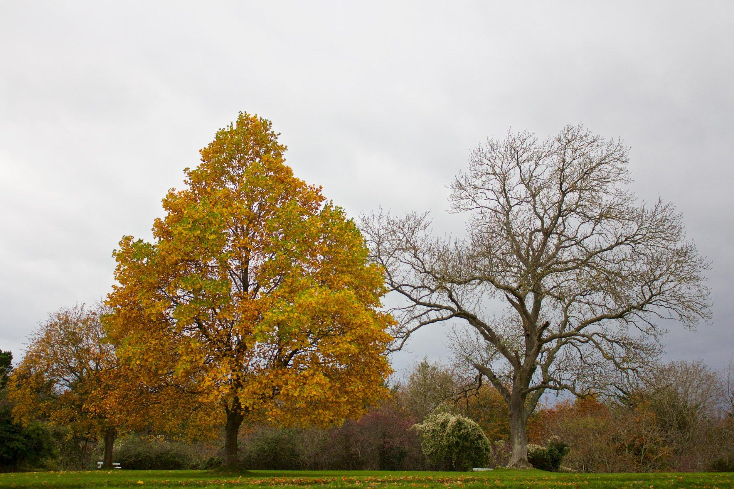 Autumn_Contrast.png