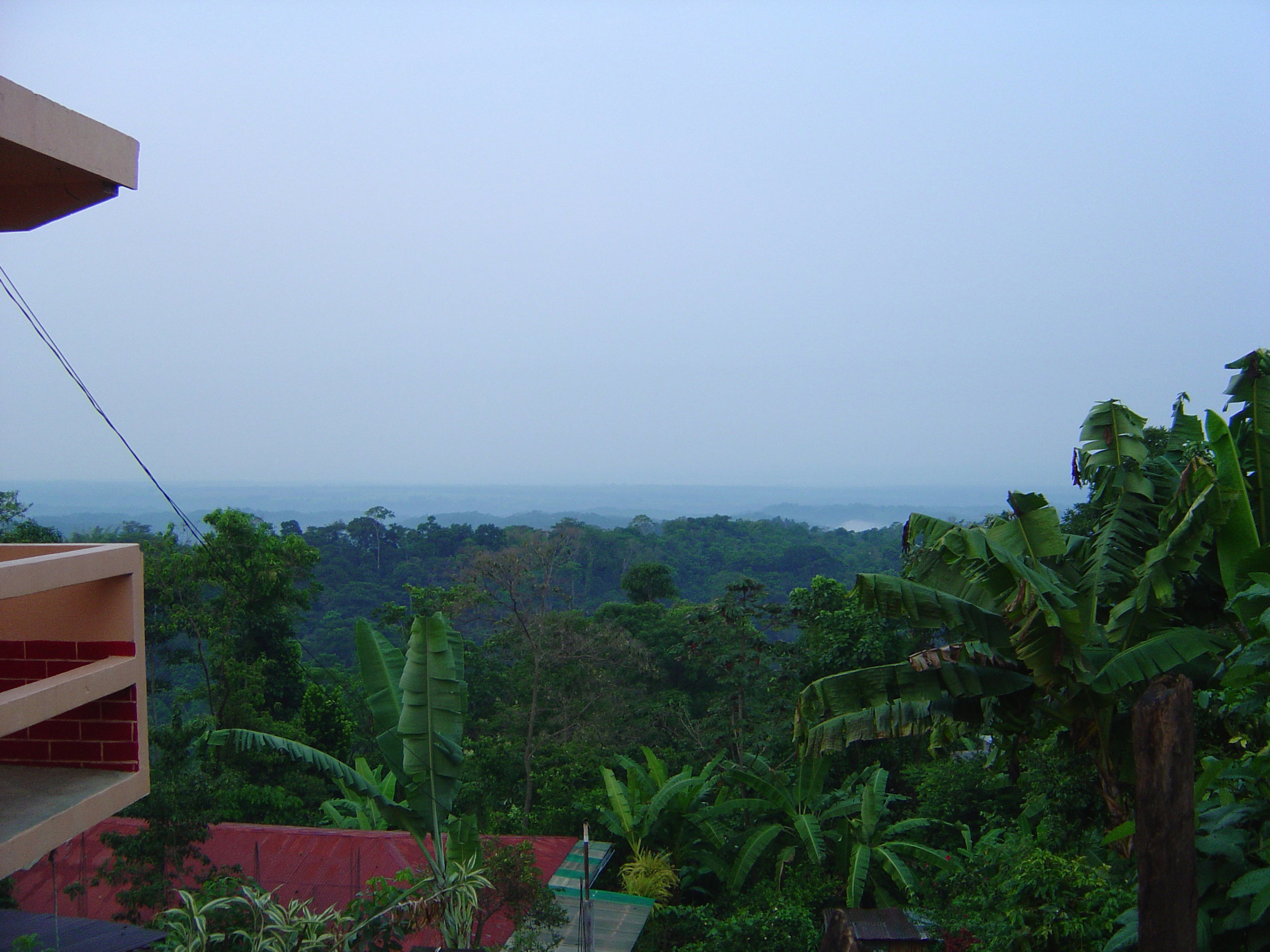 jungle-canopy.jpg