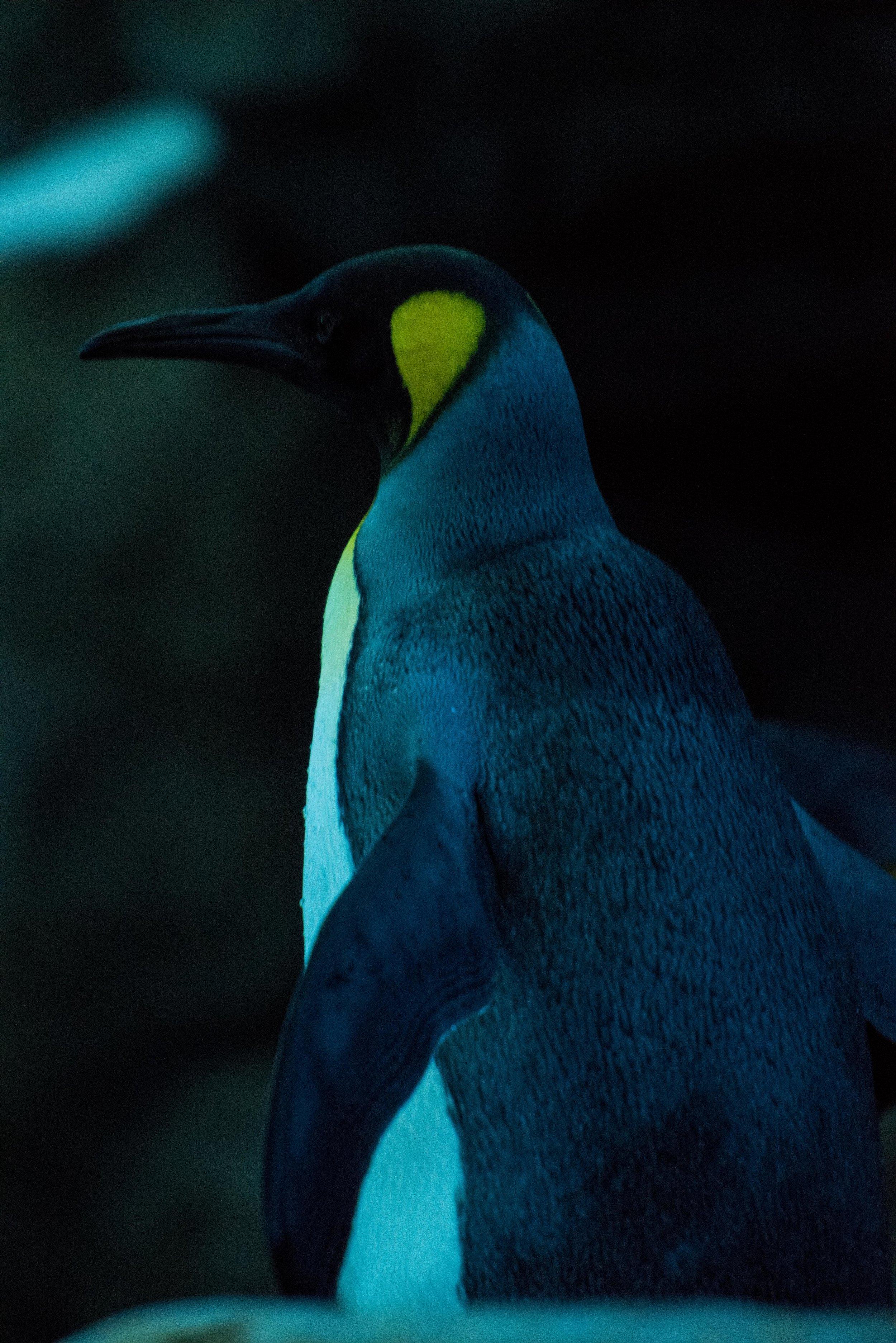 calgary zoo-3241.jpg